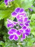 200707ixyg_086