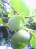 200707ixyg_093